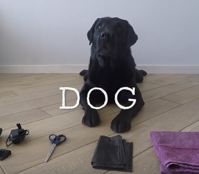 Selecting the best DIY clippers for trimming your dog's hair