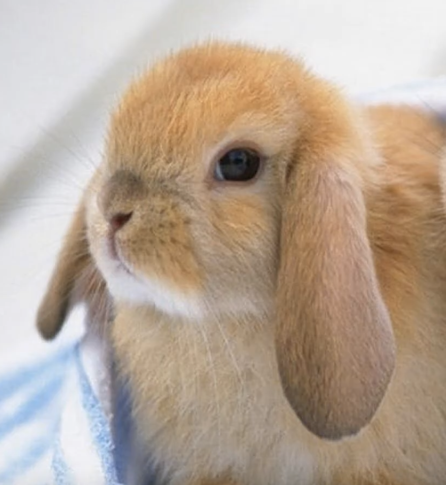 The best pets for a small apartment