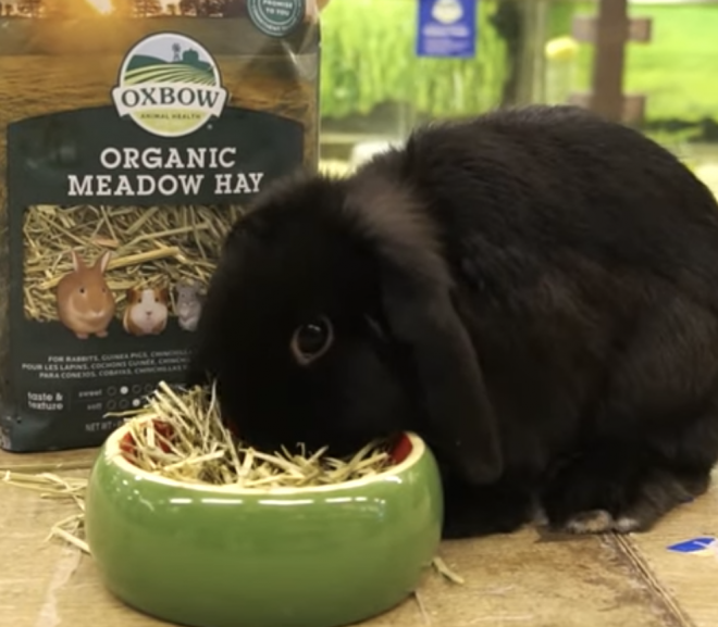 Can a rabbit eat Meadow hay?