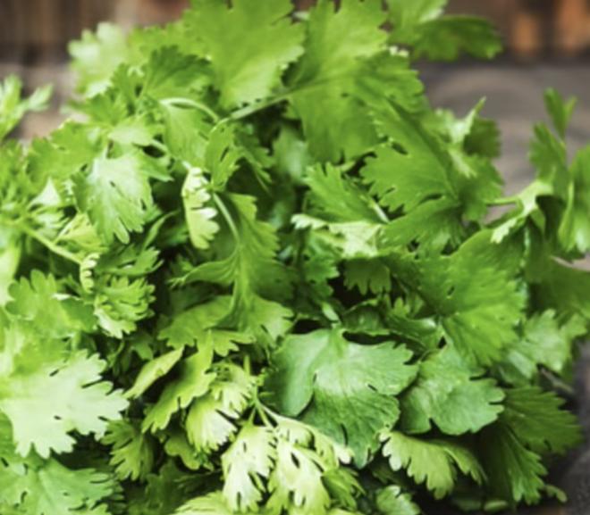 Can a rabbit eat cilantro?