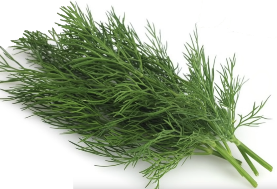 Can a rabbit eat dill?