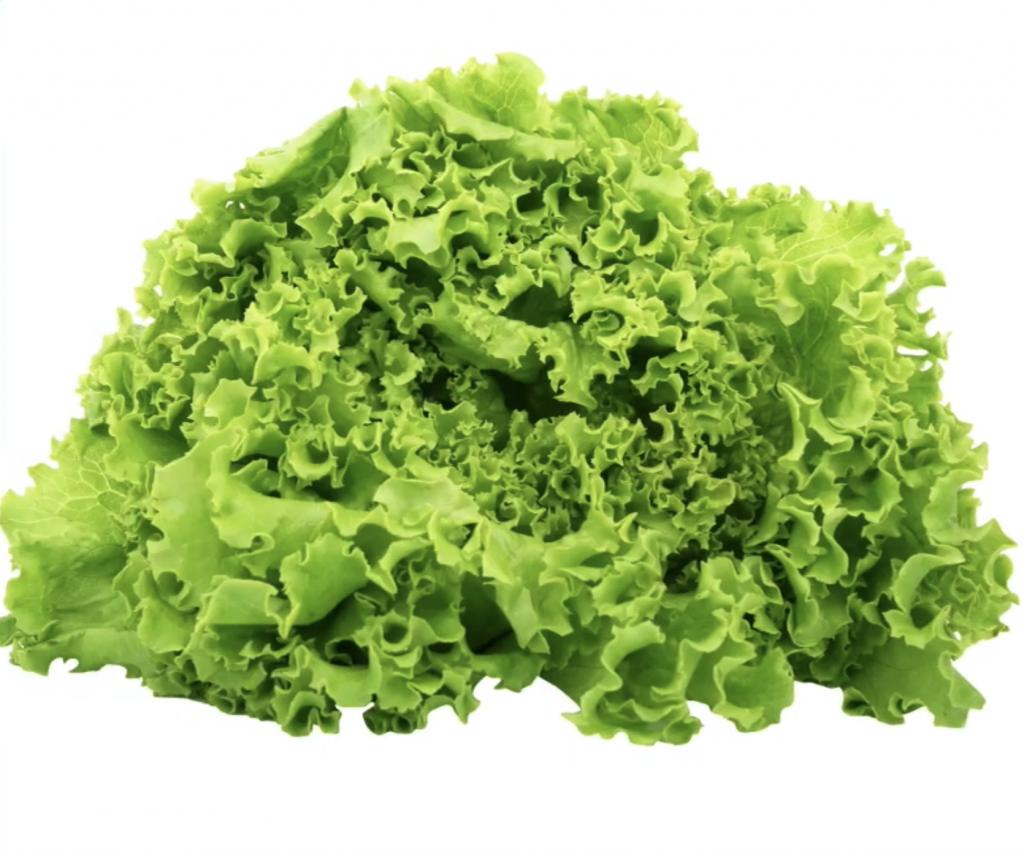 Can a rabbit eat green lettuce?