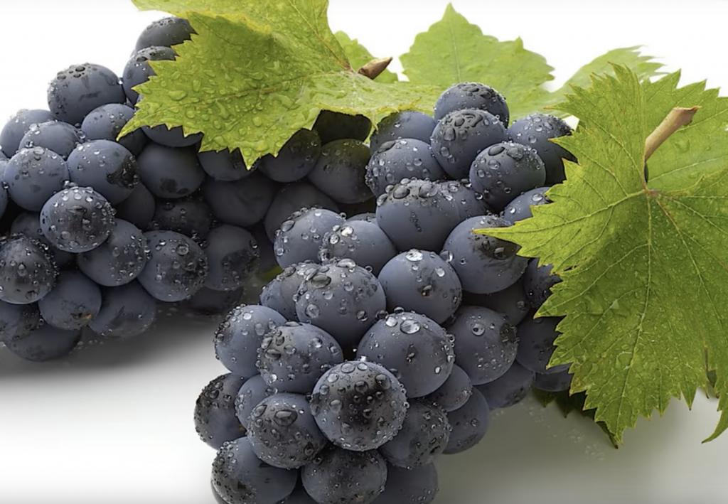 Can a rabbit eat grapes?