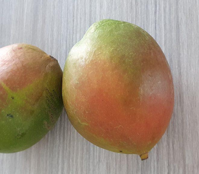 Can a rabbit eat mangoes?