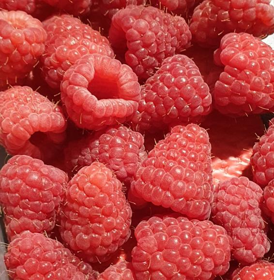 Can a rabbit eat raspberries?