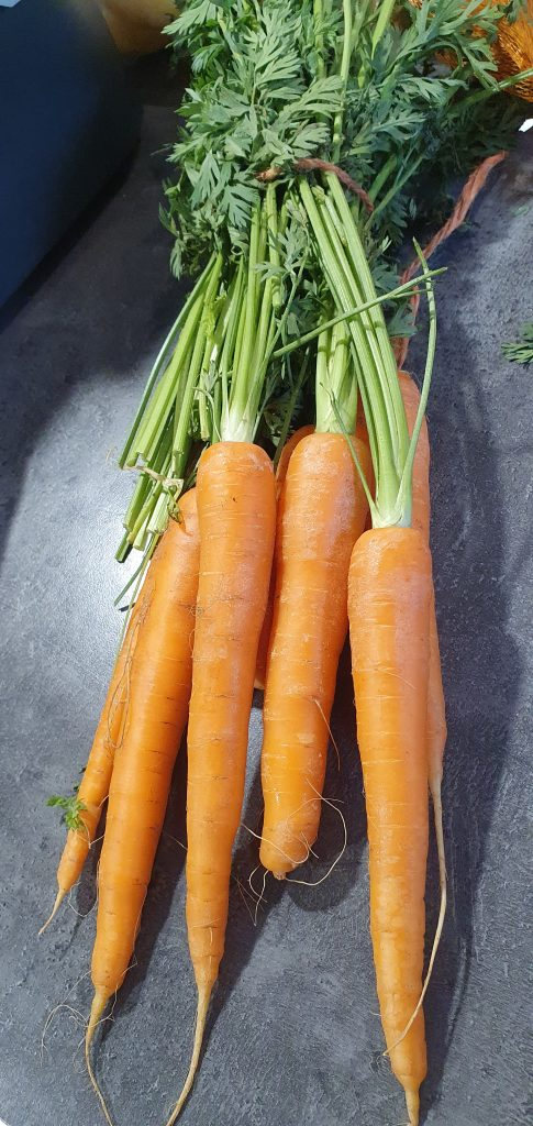 Can a rabbit eat carrots?