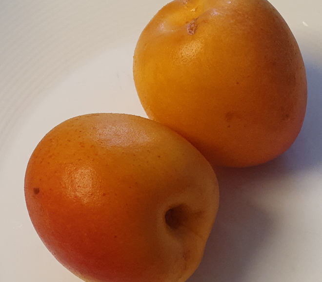 Can a rabbit eat apricots?
